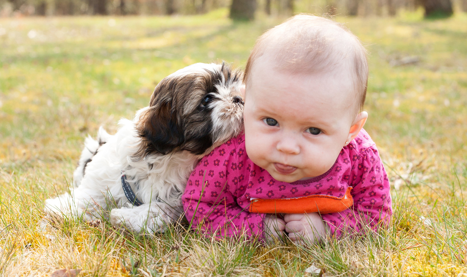 The Benefits of Owning a Dog - Perfect Match Puppy