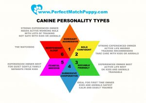 choosing the right dog personality